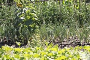 Green Garden in Talent, Oregon