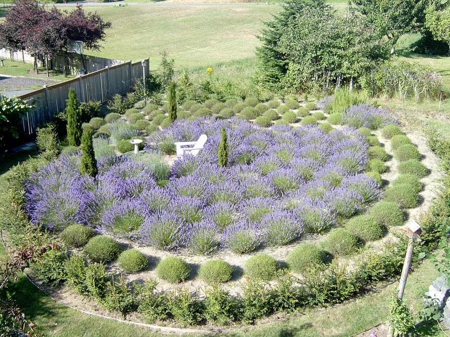 Susan Harrington Following The Lure Of Lavender