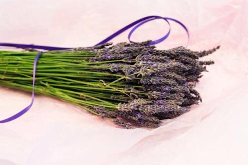 """""""Lavender, Sweet Blooming Lavender"""""""