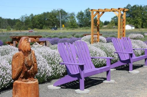 Summer at Sunshine Herb & Lavender Farm