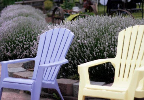 Colorful Andirondack chairs offer place to rest