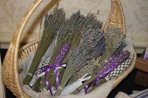 Ontario Lavender