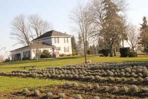 The Lavender Farm owned by Bob & Barb Gilles